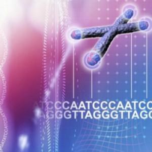 na_telomere_chromosome
