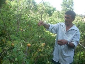 Chitwan_tarakari