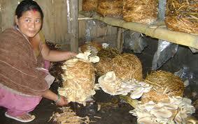 mushroom-nepal