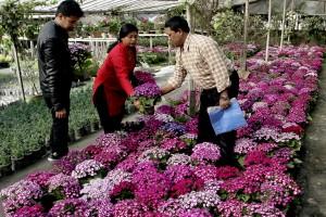 Pro_ktm_ Flower sale (1)